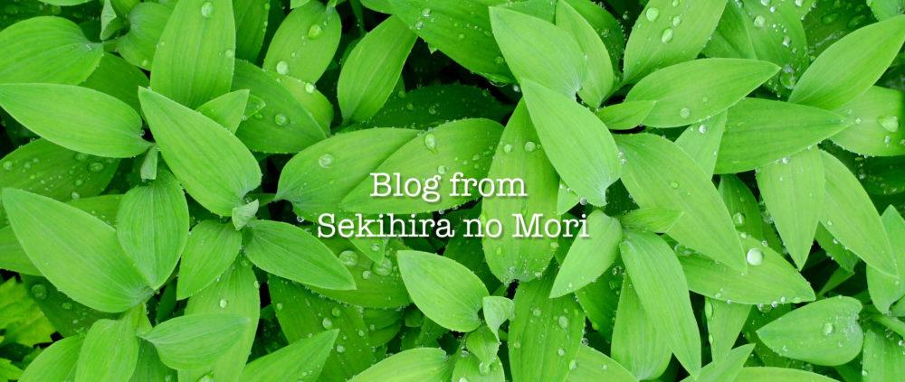 関平の森ブログ